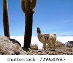 llama and saguaro cactus on... | Shutterstock . vector #729630967