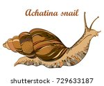 vector drawing of achatina... | Shutterstock .eps vector #729633187