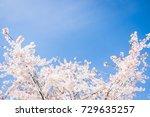 Beautiful Cherry Blossom In...