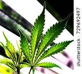 pot plant  marijuana bud ... | Shutterstock . vector #729692497