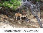 powerful red deer stag in in...   Shutterstock . vector #729694327
