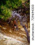 powerful red deer stag in in...   Shutterstock . vector #729694333