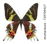 real butterfly colour  ... | Shutterstock . vector #729709417