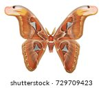real butterfly colour  ... | Shutterstock . vector #729709423
