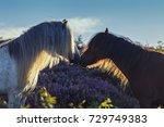 wild horses on upland heathland ... | Shutterstock . vector #729749383