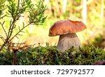 White Mushroom This Year We Ha...