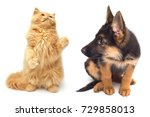 persian kitten attacking the... | Shutterstock . vector #729858013