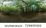 mixed forest summer 360 vr... | Shutterstock . vector #729859303