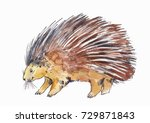 watercolor drawing of porcupine ... | Shutterstock . vector #729871843