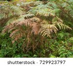 Autumnal Colours Of Bracken ...