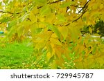 autumn leaves on tree branch | Shutterstock . vector #729945787