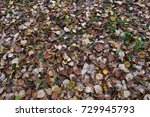 dark leaves on the ground | Shutterstock . vector #729945793