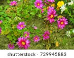 purple flower on the ground | Shutterstock . vector #729945883