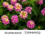cyprus flowers | Shutterstock . vector #729949933