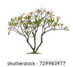 isolated frangipani or plumeria ... | Shutterstock . vector #729983977