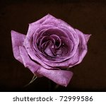 grunge rose background   Shutterstock . vector #72999586
