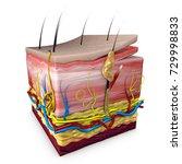 human body skin section ... | Shutterstock . vector #729998833
