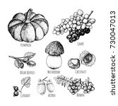 set of autumnal fruits isolated ... | Shutterstock .eps vector #730047013
