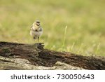 close up of a juvenile white... | Shutterstock . vector #730050643