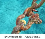 juvenile coral that found on... | Shutterstock . vector #730184563