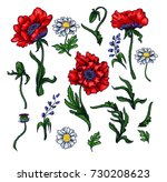 Vector Elements Of Red Poppy ...