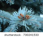 natural old christmas tree wood ... | Shutterstock . vector #730241533