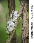 Small photo of A small tree toad camouflages itself against a branch.