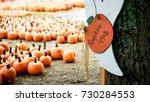 Several Pumpkin Patches Of...
