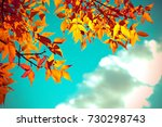 autumn leaves with the blue sky ...   Shutterstock . vector #730298743