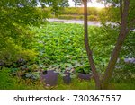 lotus lake  largest lake... | Shutterstock . vector #730367557