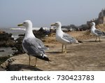 group of seagulls on the cost... | Shutterstock . vector #730423783