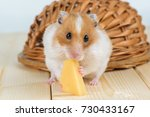 a hamster close up eats cheese... | Shutterstock . vector #730433167
