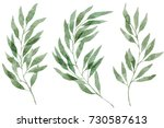 a set of watercolor eucalyptus... | Shutterstock . vector #730587613