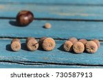 Small photo of acorns on blue old wooden boards on a blurred background of chestnut and acorn hat