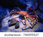 giant crab. | Shutterstock . vector #730595527