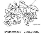 hand drawing and sketch jasmine ... | Shutterstock .eps vector #730693087