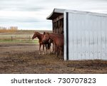 team of brown horses inside a... | Shutterstock . vector #730707823