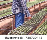 plant breeders are separating... | Shutterstock . vector #730730443