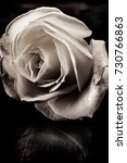Stock photo toned black and white rose on black glass 730766863