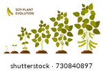 Soy Plant Evolution With Leave...