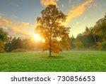 beautiful golden colored autumn ... | Shutterstock . vector #730856653