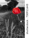 Small photo of close up of poppy at Appia Antica Street in Rome - Italy