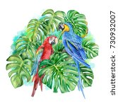 monstera. blue yellow macaw.... | Shutterstock . vector #730932007