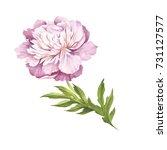 image of peony flower. hand... | Shutterstock . vector #731127577