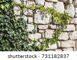 Small photo of Ivy growing on atone brick wall