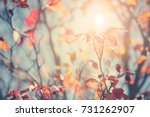 colorful tree in autumn  sunny... | Shutterstock . vector #731262907
