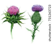 Wildflower Thistle Flower In A...