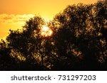 sunset at danube delta | Shutterstock . vector #731297203