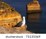 Portugal Algarve Region Seagul...