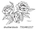 Hand Drawing And Sketch Peony...